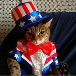 Proud American Domestic House Cat