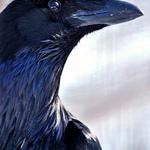 Raven MPH