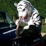 Tiger  Diesel