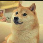 Dav The Doge