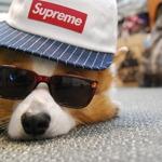 Swag Puppy