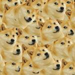 Doge Jr.