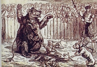 An etching of the hennous act of Bear-Baiting