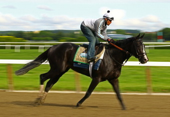 ELMONT, NY - JUNE 05:  Street Life gallops on the track during a morning workout at Belmont Park on June 5, 2012 in Elmont, New York.  (Photo by Al Bello/Getty Images)