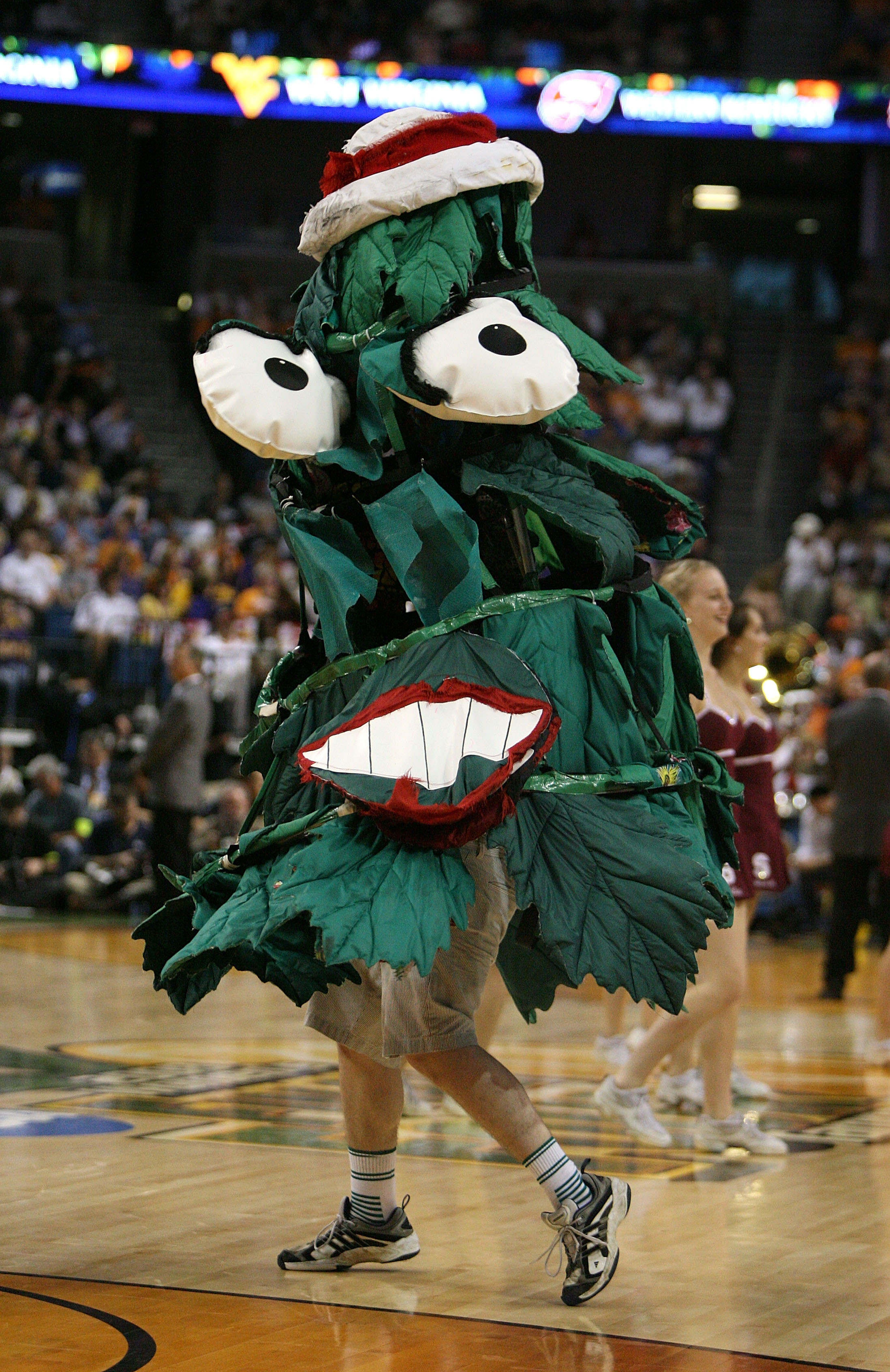 TAMPA, FL - APRIL 06:  The mascot for the Stanford Cardinal performs against the UCONN Huskies during their National Semifinal Game of the 2008 NCAA Women's Final Four at St. Pete Times Forum April 6, 2008 in Tampa, Florida.  (Photo by Doug Benc/Getty Ima