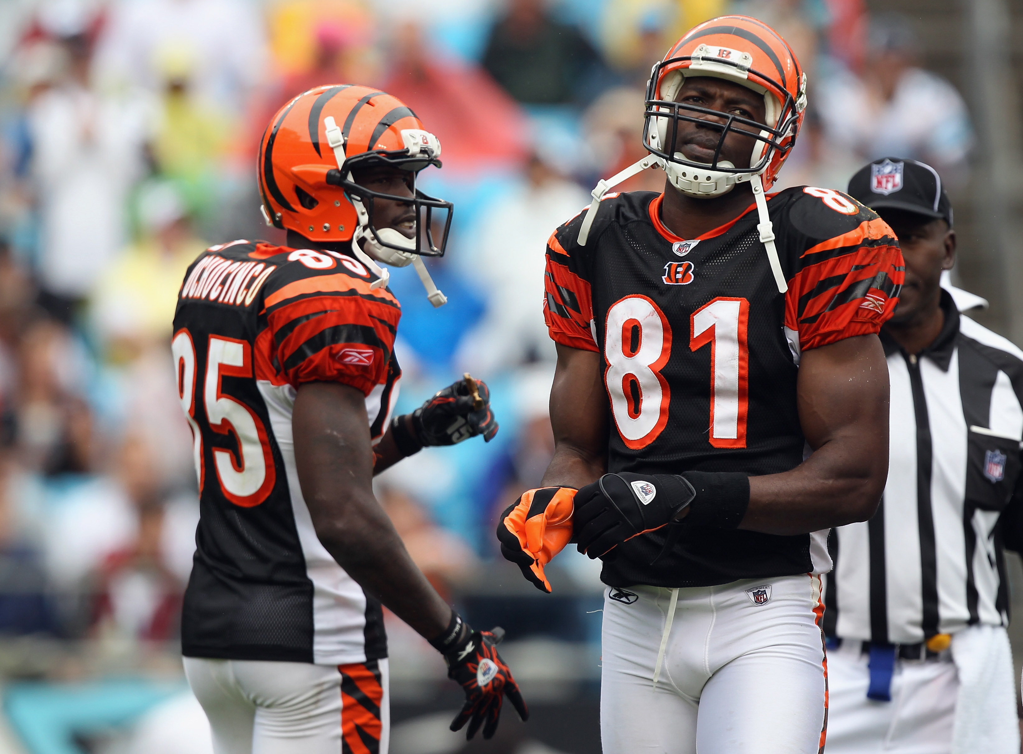 CHARLOTTE, NC - SEPTEMBER 26:  Chad Ochocinco #85 and teammate Terrell Owens #81 of the Cincinnati Bengals wait for a play against the Carolina Panthers during their game at Bank of America Stadium on September 26, 2010 in Charlotte, North Carolina.  (Pho