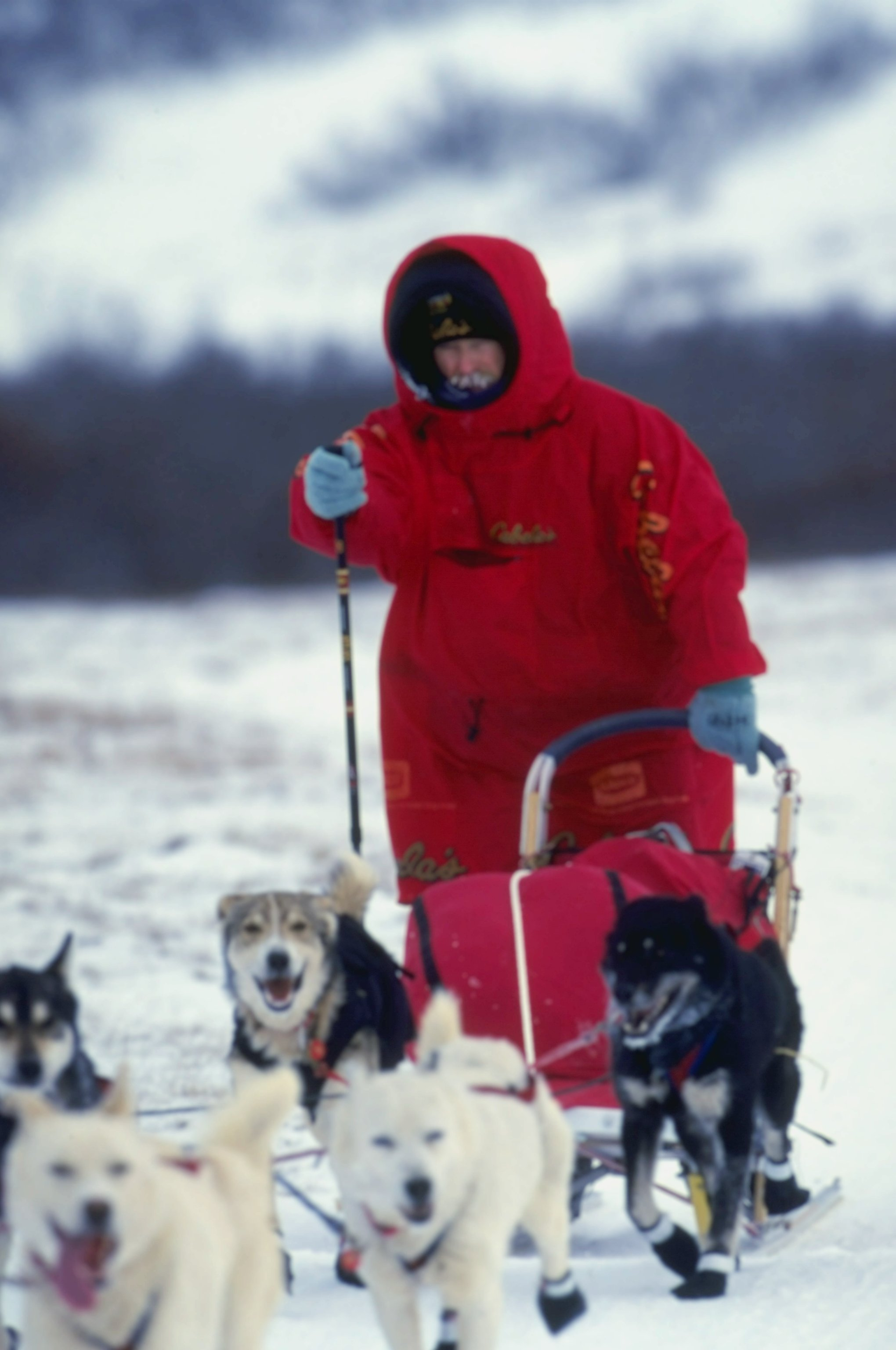 15 Mar 1999: Jeff King mushes his dogs during the Iditarod Trail Race in Alaska. Mandatory Credit: Ezra O. Shaw  /Allsport