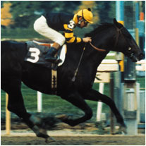 Zenyatta Breeders Cup And The Most Famous Losses In Horse