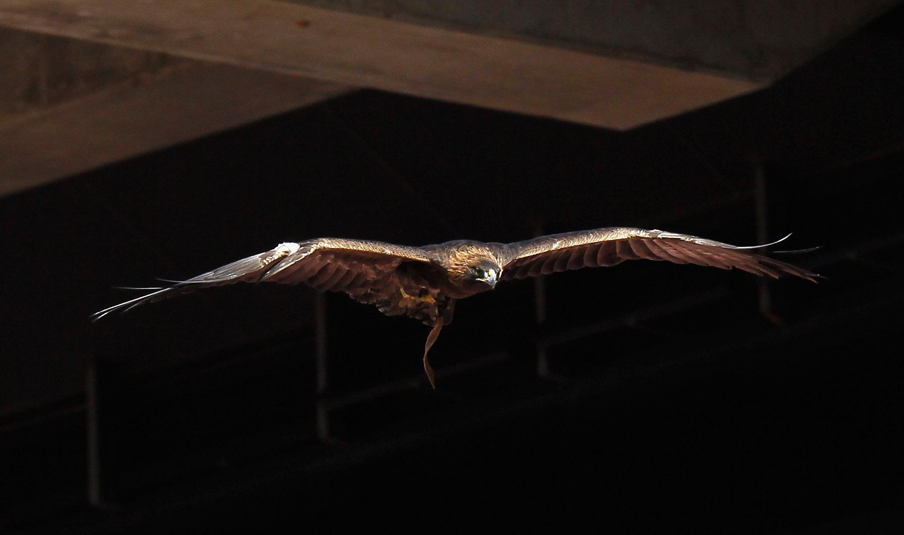 Auburn's War Eagle
