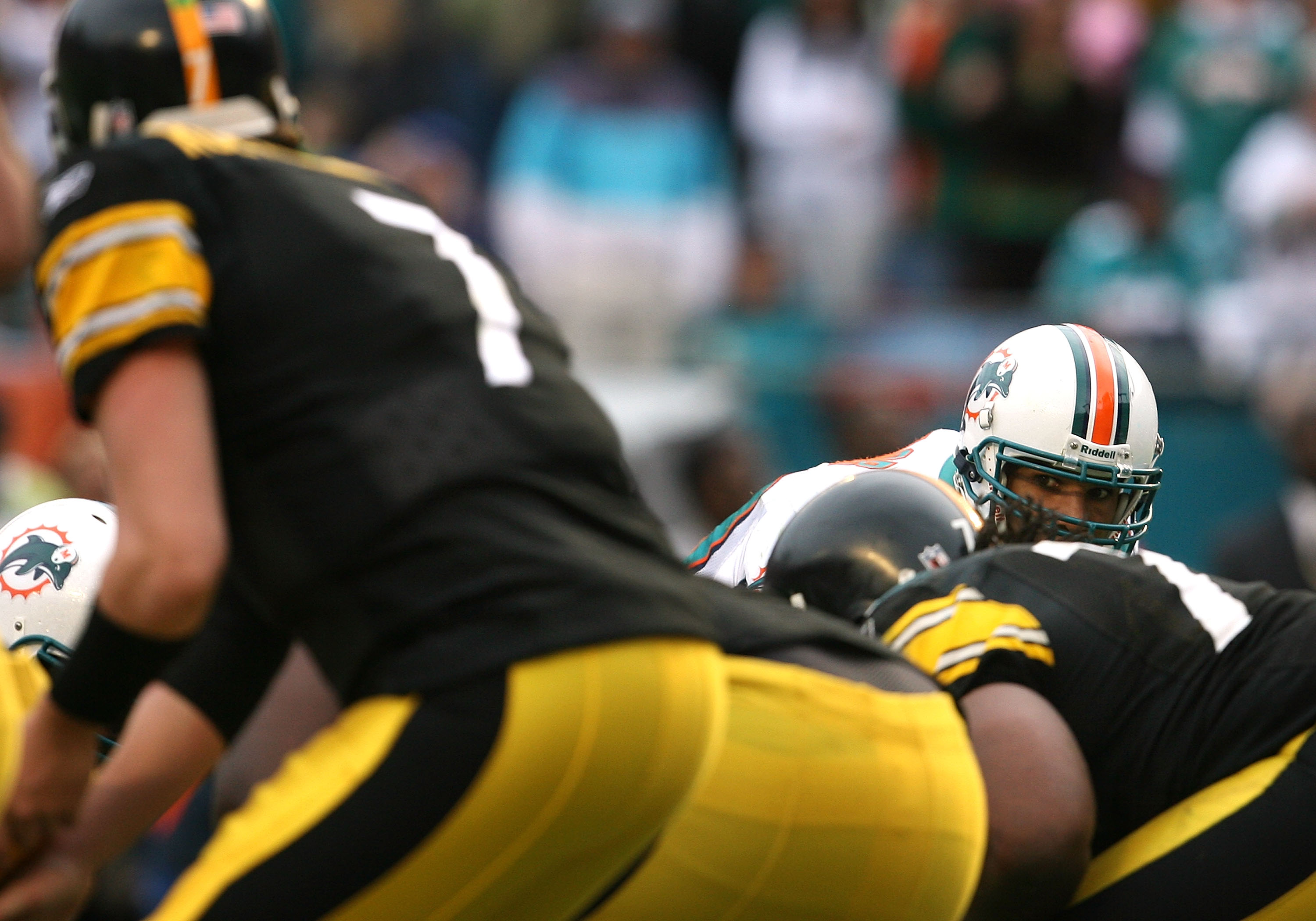 MIAMI - JANUARY 03:  Linebacker Jason Taylor #99 of the Miami Dolphins looks in as quarterback Ben Roethlisberger #7 of the Pittsburgh Steelers calls out a play at the line of scrimmage at Land Shark Stadium on January 3, 2010 in Miami, Florida. The Steel