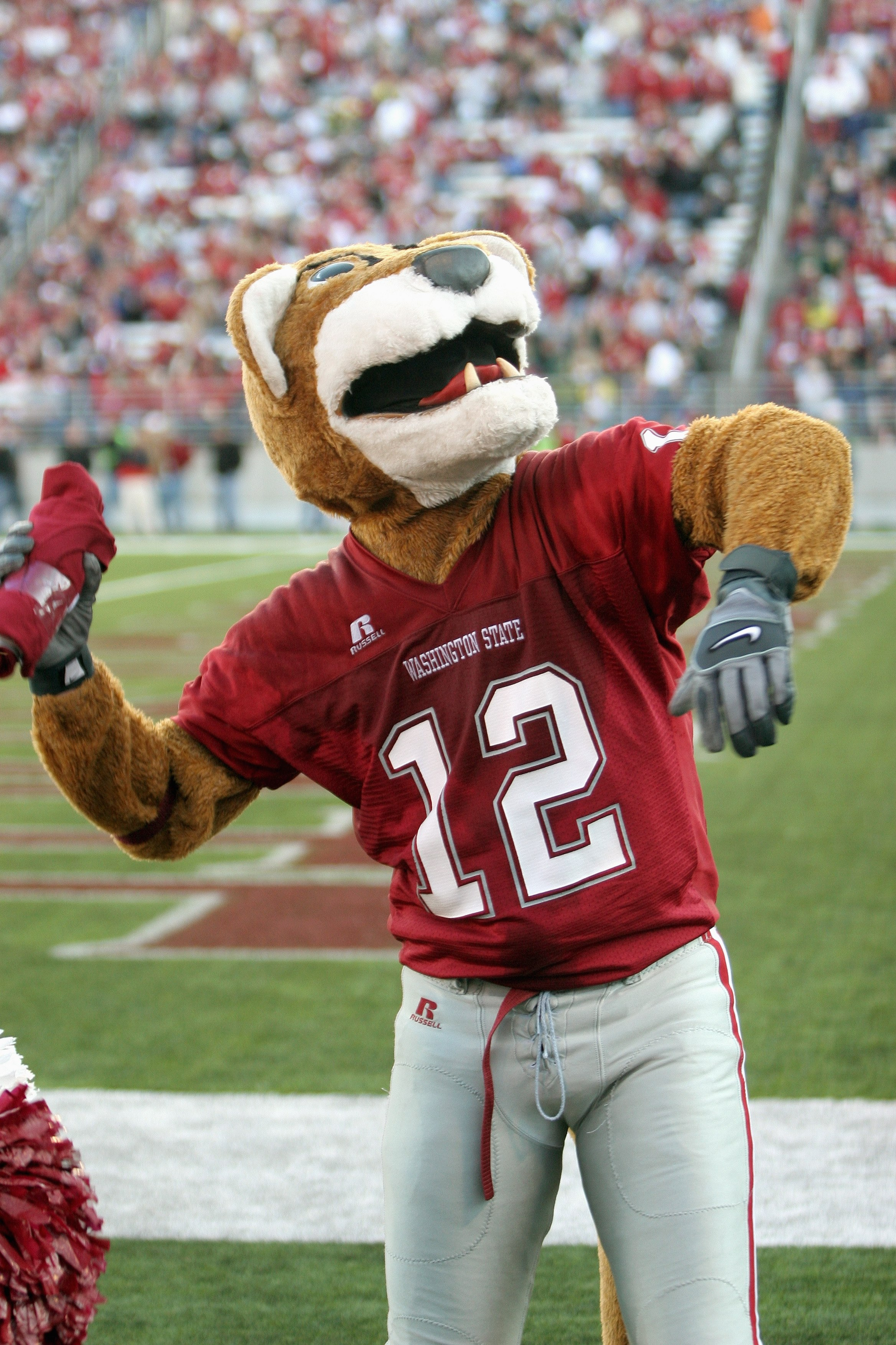PULLMAN, WA - OCTOBER 21:  The Washington State Cougars mascot entertains the crowd during the game against the Oregon Ducks on October 21, 2006 at Martin Stadium in Pullman, Washington. Washington State won 34-23. (Photo by Otto Greule Jr/Getty Images)