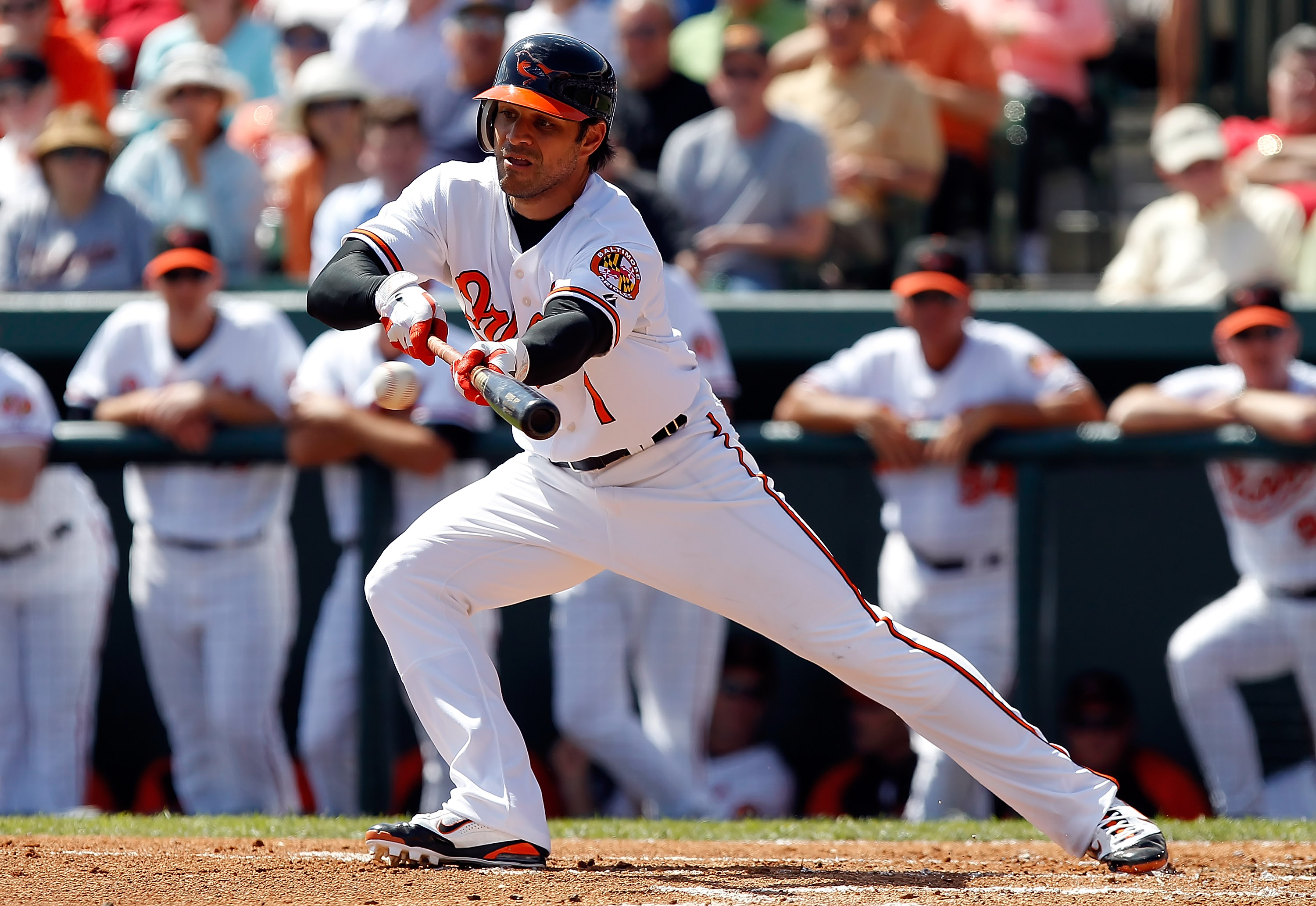 SARASOTA, FL - MARCH 03:  Infielder Brian Roberts #1 of the Baltimore Orioles tries to drag a bunt against the Minnesota Twins during a Grapefruit League Spring Training Game at Ed Smith Stadium on March 3, 2011 in Sarasota, Florida.  (Photo by J. Meric/G