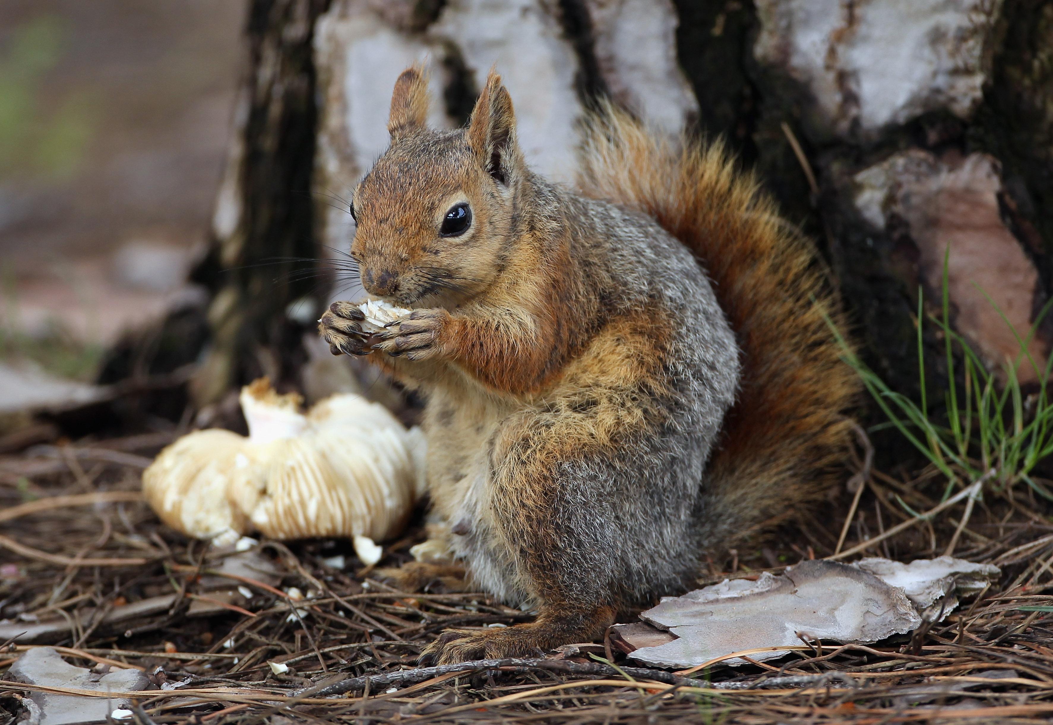 Image of: Cute Round Animals Who Ya Got Bleacher Report Athletes Vs Animals Who Ya Got Bleacher Report Latest News