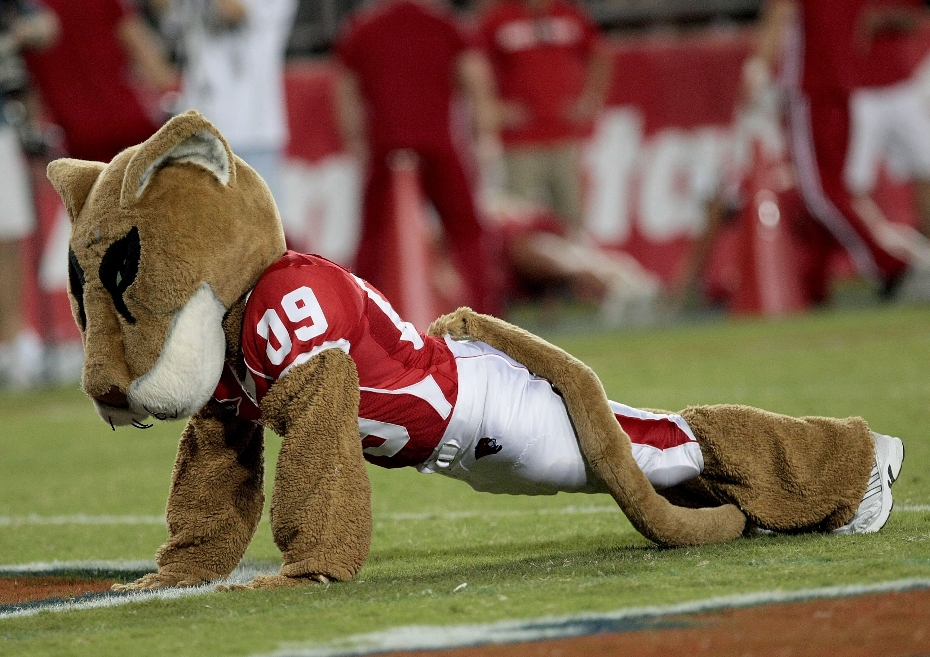 HOUSTON - SEPTEMBER 26: University of Houston mascot 'Sasha' does pushups after the Houston Cougars scored against  the Texas Tech Red Raiders at Robertson Stadium on September 26, 2009 in Houston, Texas.  (Photo by Thomas B. Shea/Getty Images)