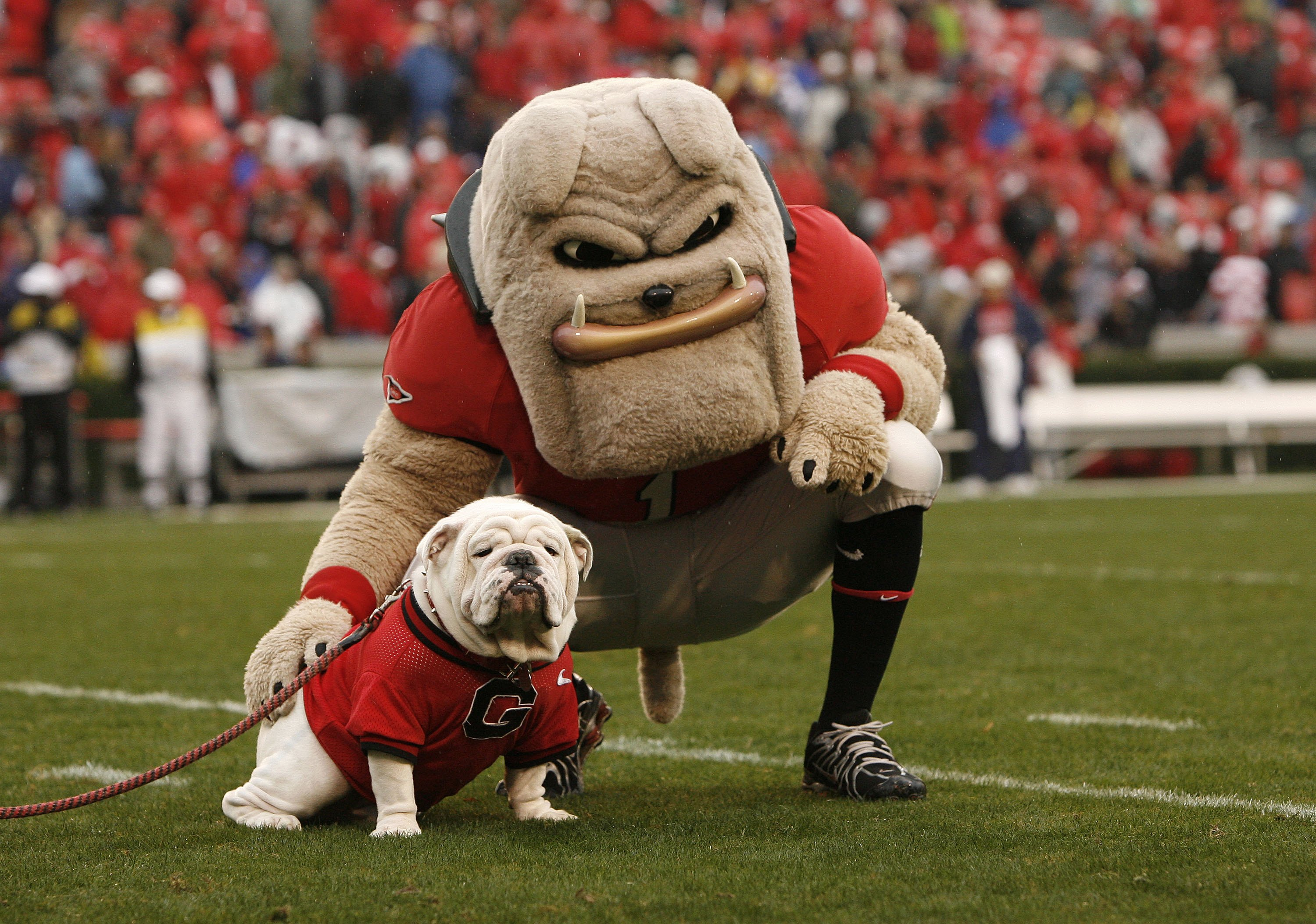 ATHENS, GA - NOVEMBER 29:  Georgia Bulldogs mascots Hairy Dawg (R) and UGA VII pose together for photos before the game against the Georgia Tech Yellow Jackets at Sanford Stadium on November 29, 2008 in Athens, Georgia.  The Yellow Jackets defeated the Bu