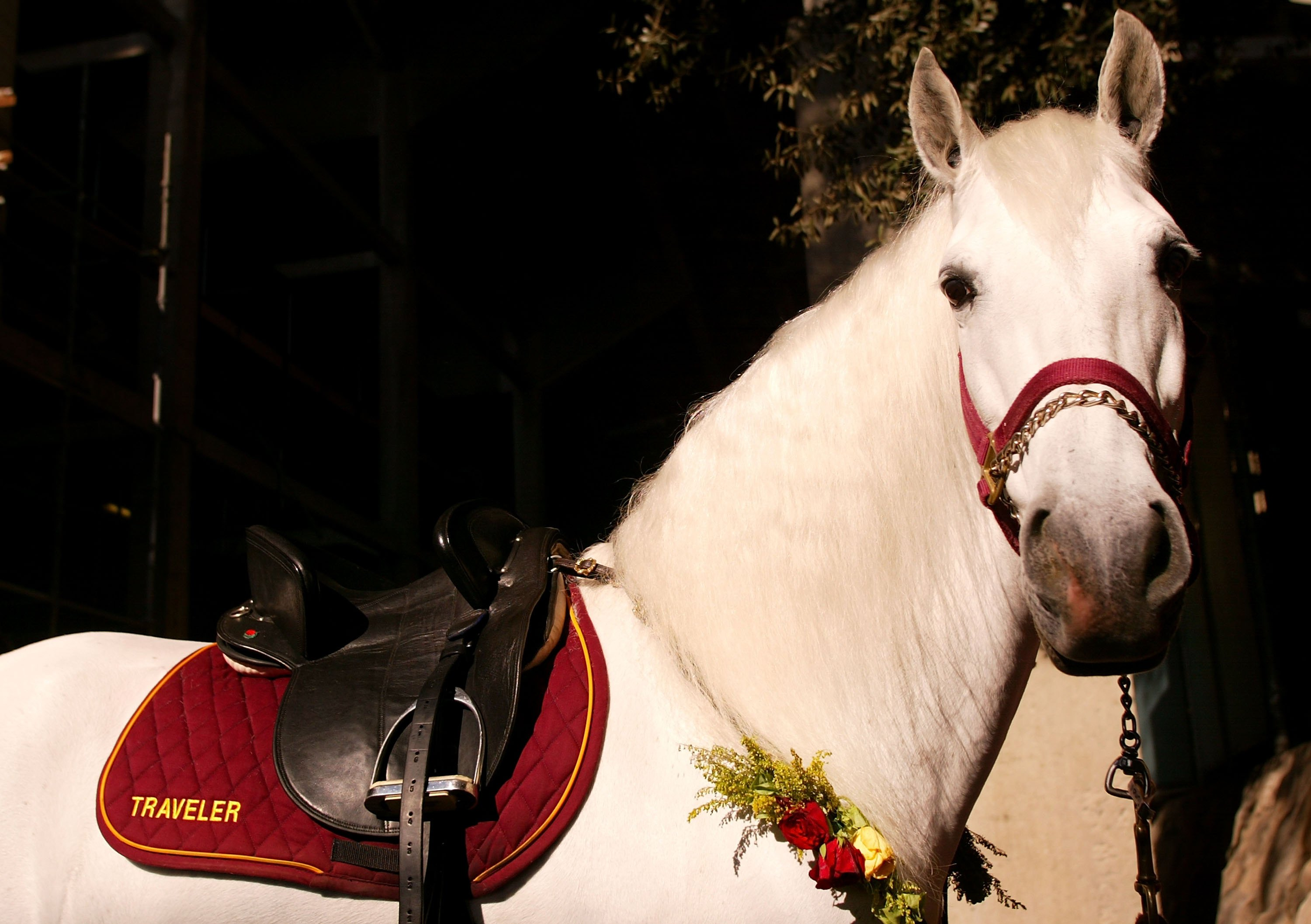 PASADENA, CA - JANUARY 01:  The USC Trojans mascot horse, Traveler looks on before the Rose Bowl game against the Michigan Wolverines on January 1, 2007 at the Rose Bowl in Pasadena, California. The Trojans defeated the Wolverines 32-18.  (Photo by Christ