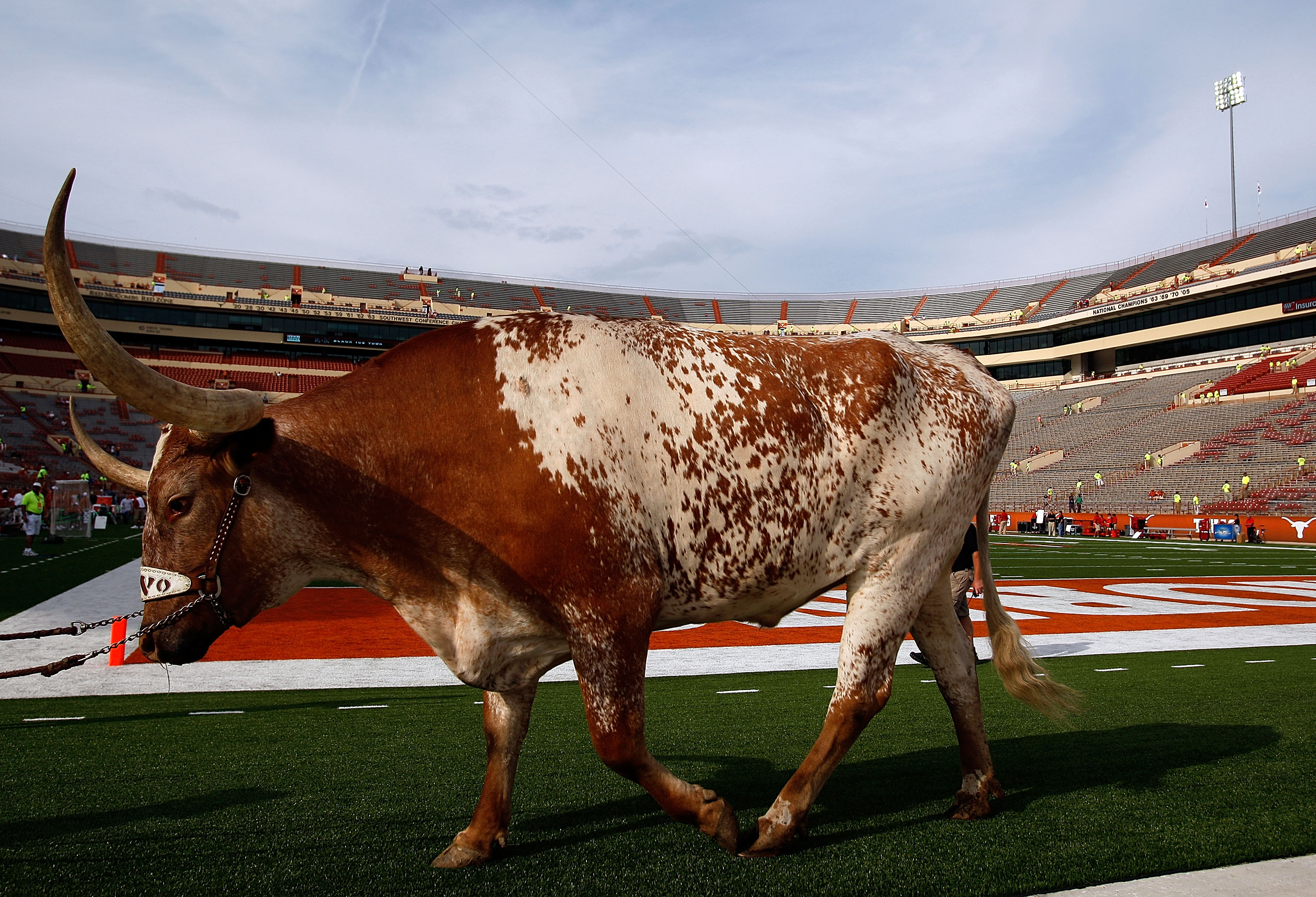 AUSTIN, TX - SEPTEMBER 19:  The Texas Longhorns mascot 'Bevo' walks on the field before a game against the Texas Tech Red Raiders at Darrell K Royal-Texas Memorial Stadium on September 19, 2009 in Austin, Texas.  (Photo by Ronald Martinez/Getty Images)