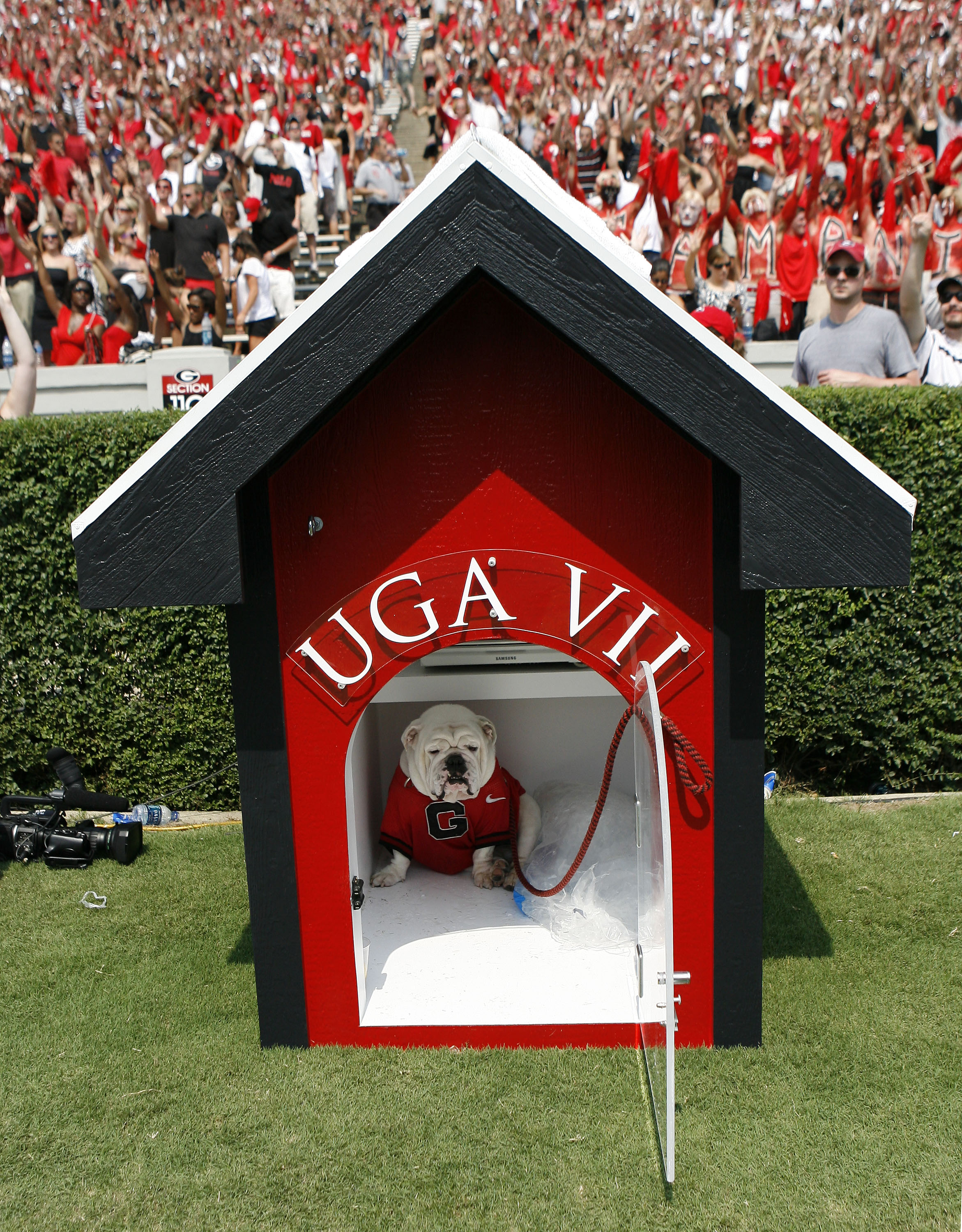 ATHENS - AUGUST 30:  The University of Georgia's new mascot, UGA VII, sits in his doghouse during the game between the Georgia Bulldogs and the Georgia Southern Eagles at Sanford Stadium on August 30, 2008 in Athens, Georgia.  The Bulldogs beat the Eagles