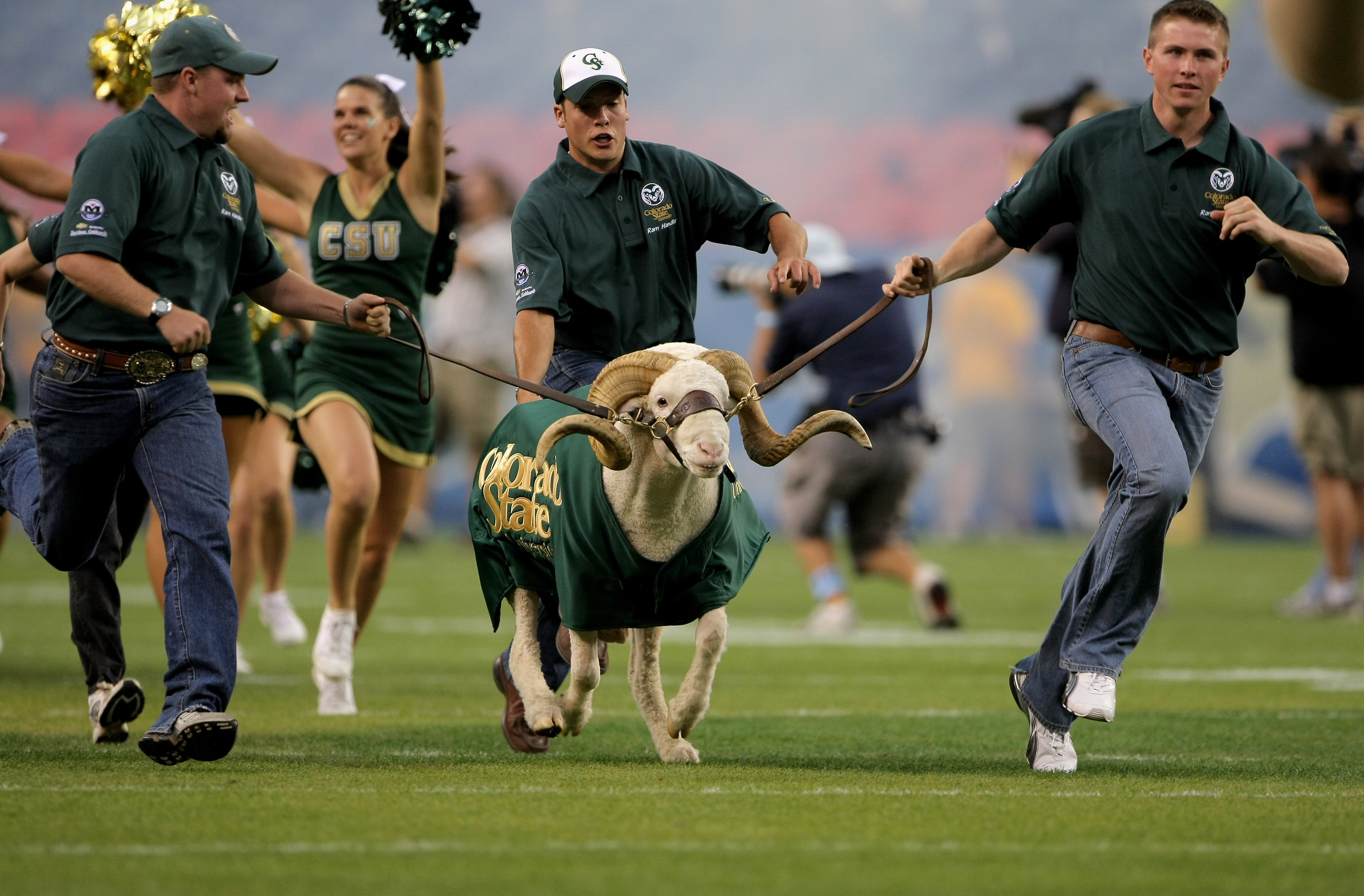DENVER - AUGUST 31:  The Colorado State University Rams CAM the Ram is escorted onto the field prior to facing the University of Colorado Buffaloes at Invesco Field at Mile High on August 31, 2008 in Denver, Colorado. Colorado defeated Colorado State 38-1
