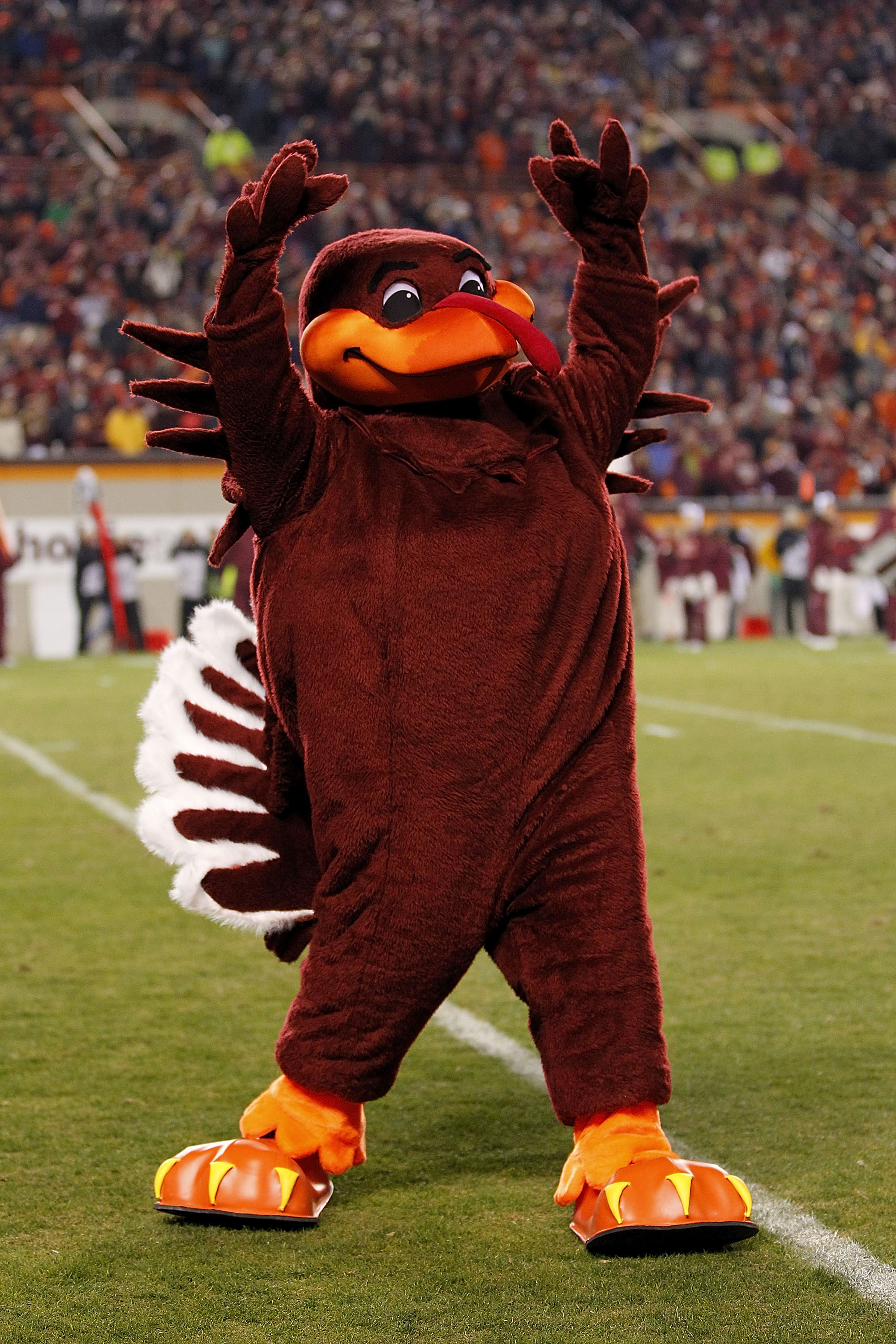 BLACKSBURG, VA - NOVEMBER 04: 'Hokie Bird', the mascot for the Virginia Tech Hokies, performs on the field against the Georgia Tech Yellow Jackets at Lane Stadium on November 4, 2010 in Blacksburg, Virginia.  (Photo by Geoff Burke/Getty Images)