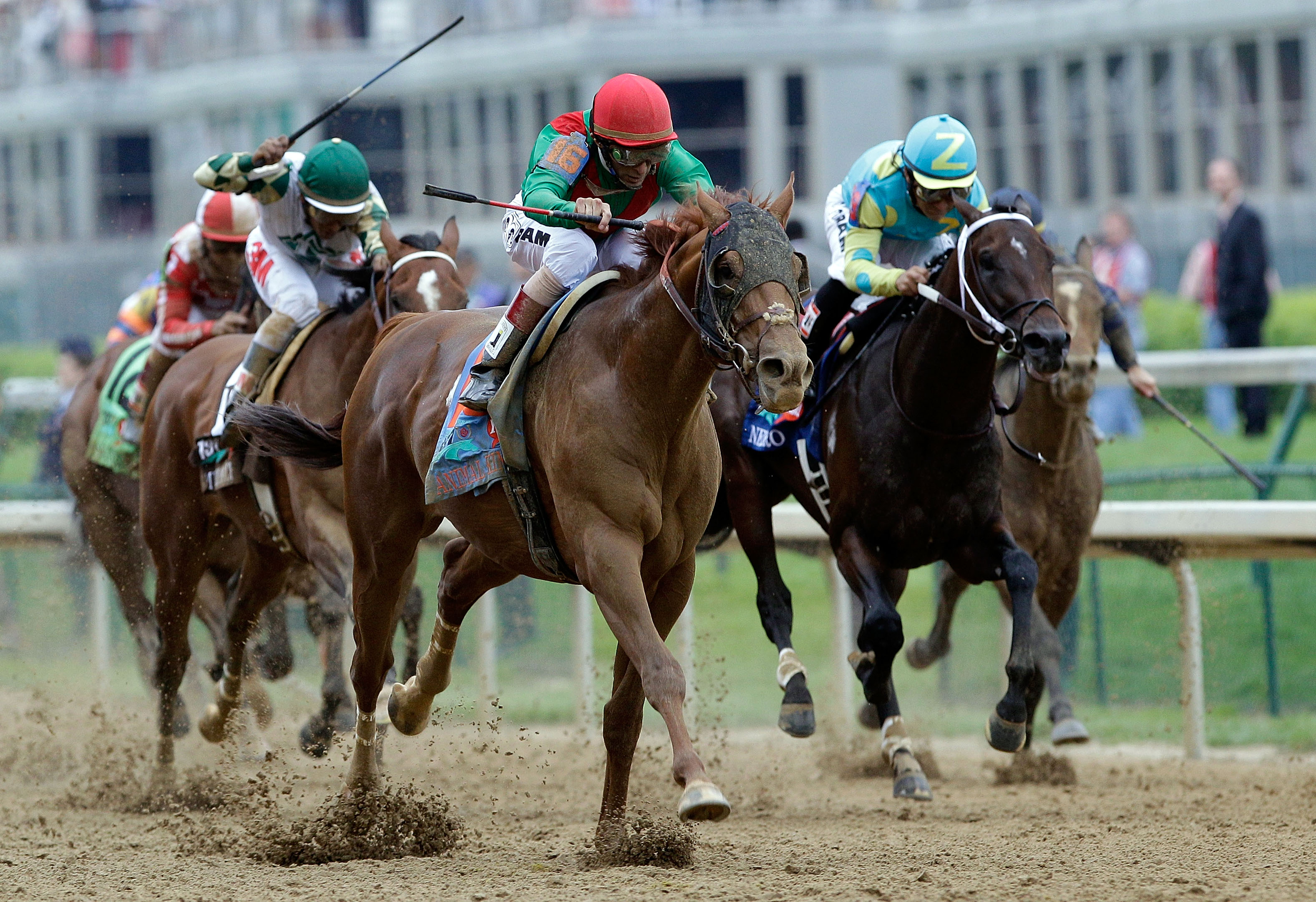 LOUISVILLE, KY - MAY 07:  Jockey John Velazquez, riding Animal Kingdom #16, celebrates leads a pack down the front stretch on his way to winning the 137th Kentucky Derby at Churchill Downs on May 7, 2011 in Louisville, Kentucky.  (Photo by Rob Carr/Getty