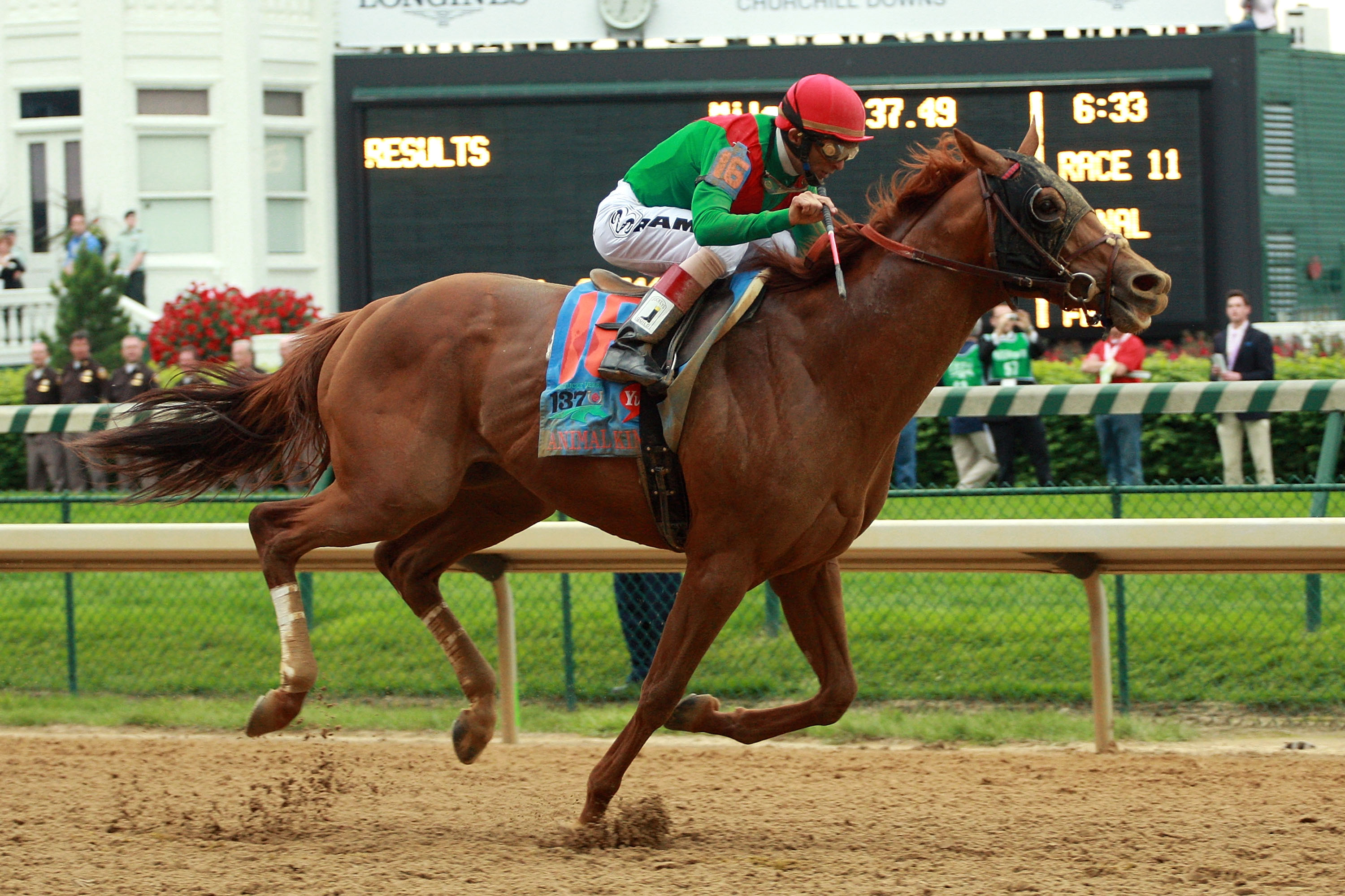LOUISVILLE, KY - MAY 07:  Jockey John Velazquez, riding Animal Kingdom #16, races towards the finish line to win the 137th Kentucky Derby at Churchill Downs on May 7, 2011 in Louisville, Kentucky.  (Photo by Travis Lindquist/Getty Images)