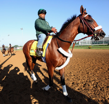 LOUISVILLE, KY - MAY 05:  Kentucky Derby entrant Mucho Macho Man with exercise rider Mike Heera up works during morning workouts in preparation for the 137th running of the Kentucky Derby on May 5, 2011 at Churchill Downs in Louisville, Kentucky.  (Photo
