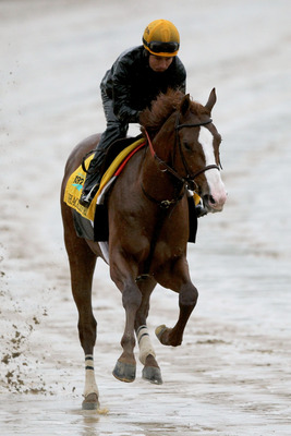 LOUISVILLE, KY - MAY 03:  Shackleford runs during the morning exercise session in preparation for the 137th Kentucky Derby at Churchill Downs on May 3, 2011 in Louisville, Kentucky.  (Photo by Matthew Stockman/Getty Images)