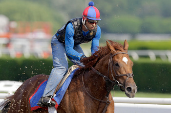 ELMONT, NY - JUNE 10:  Exercise rider David Nava takes Animal Kingdom for a morning training session in preparation for the 143rd running of The Belmont Stakes at Belmont Park on June 10, 2011 in Elmont, New York.  (Photo by Rob Carr/Getty Images)