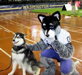 washington huskies football 8 reasons seattle is the best game day