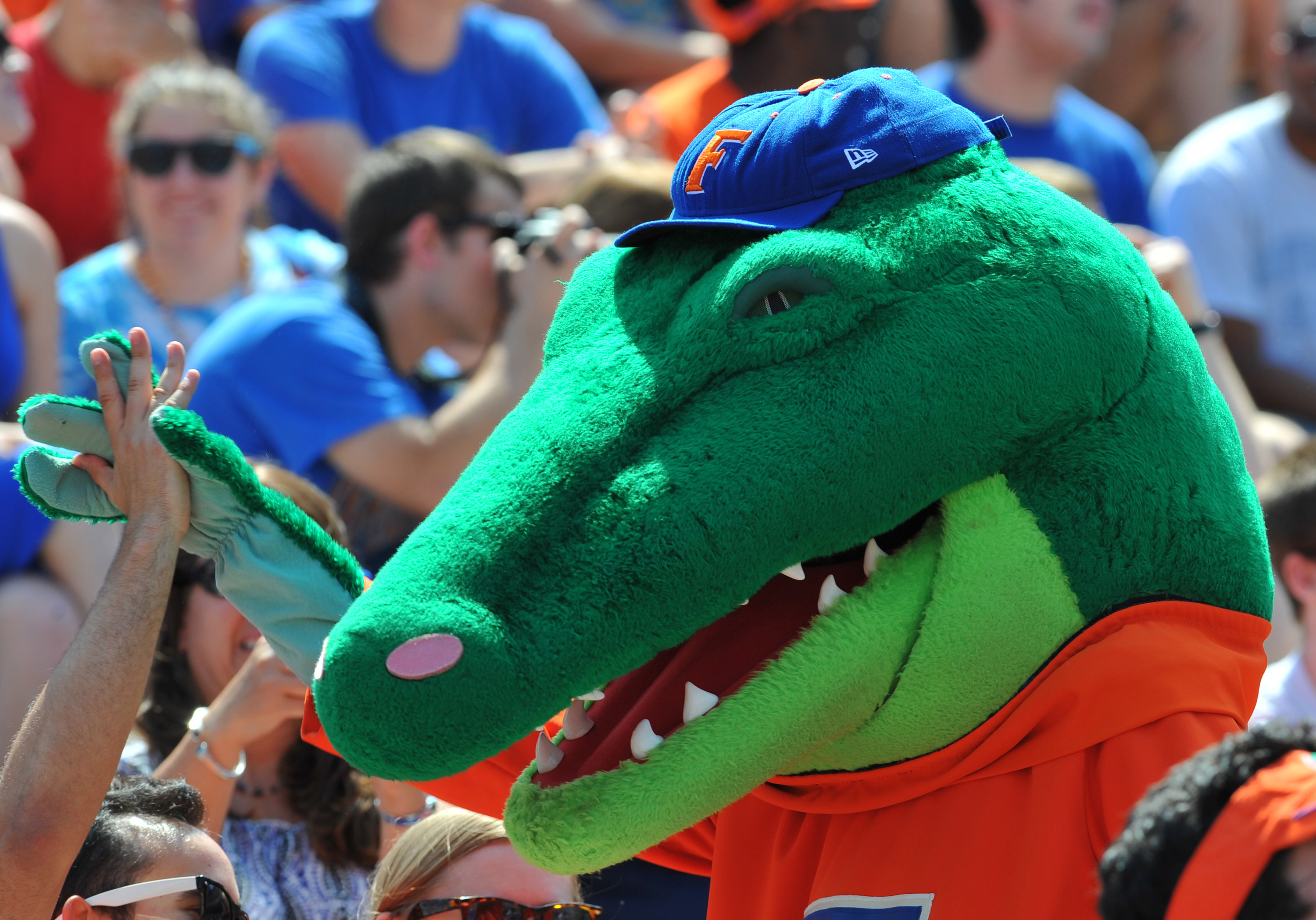 GAINESVILLE, FL - APRIL 9: The Florida Gators mascot celebrates with fans during the Orange and Blue spring football game April 9, 2011 at Ben Hill Griffin Stadium in Gainesville, Florida.  (Photo by Al Messerschmidt/Getty Images)